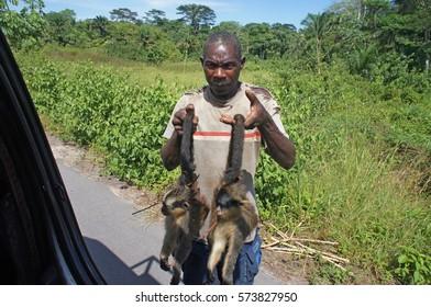 Poacher is selling dead monkeys on the side of the road near Impfondo, Likouala region, Congo-Brazzaville, March 2014