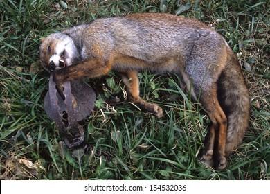 poaching killing