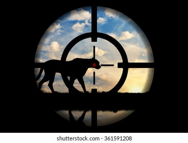 Poaching. Silhouette of a leopard against the sunset at gunpoint poacher