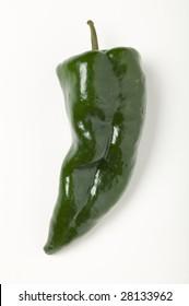 Poblano chili pepper