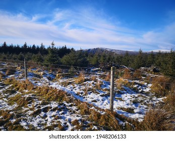 Pockets of snow fall on a grassy moorland field with pine forest behind
