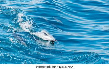 Pod of Dolphins Jumping together. Blue water. Dolphins.