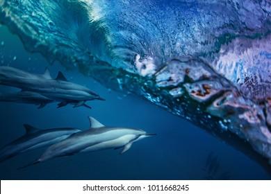Pod of Dolphins Under sea Wave. Ocean wildlife water background
