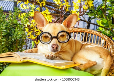 podenco dog reading his favorite book,surrounded by green plants , relaxing and sitting on a lounger or deck chair outside