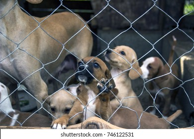 Podgorica, Montenegro, September 2017 - Homeless hunting dog and puppies waiting to be adopted by a new owner at a shelter for abandoned animals