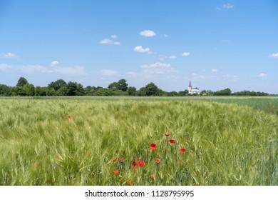 Podolia region of Ukraine. Green wheat field and blue sky