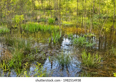 Podtopione drzewa i trawy ,odbicie błękitnego nieba w wodzie leśnego bagna wiosną.Poland in May.Horizontal view. - Shutterstock ID 1982514938
