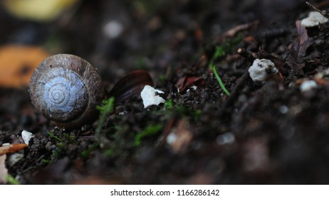 Poetic snail shell in the woods