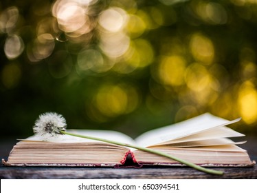 Poetry book. Summer background