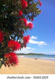 Pohutukawa red flowers blossom on the month of December over a sandy beach with a small fishing boat doubtless bay New Zealand.