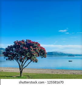 pohutukawa tree with the beach and calm ocean on a clear sky day