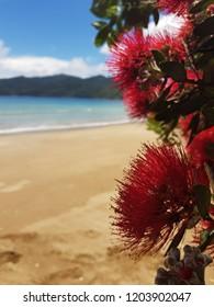 Pohutukawa Tree in New Zealand