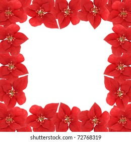 Poinsetta flower square border or frame on a white background for scrapbooking