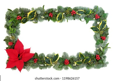 Poinsettia flower border with snow covered spruce fir, holly, ivy and mistletoe isolated on white background. Thanksgiving and Christmas theme.