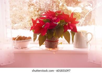Poinsettia on windowsill with snow outsides
