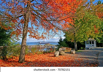 Point Defiance Park in Tacoma WA with red and orange leafs