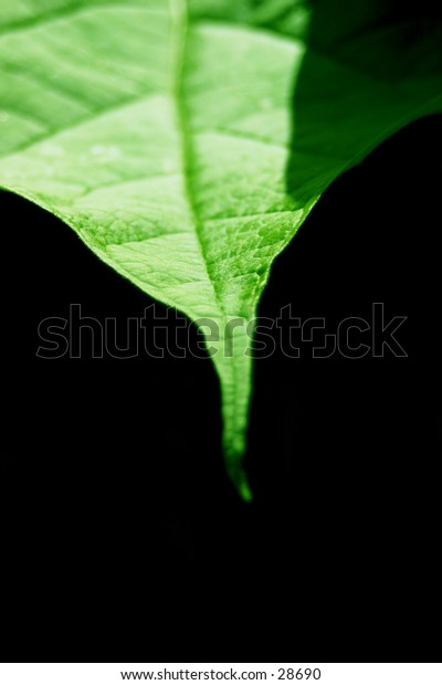 point of a leaf