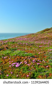 Point Reyes, California State Park.