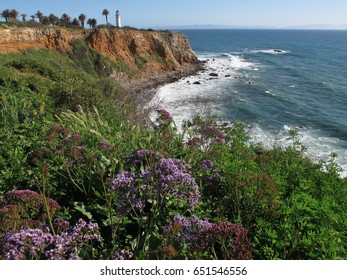 Point Vicente Lighthouse, California. The bluffs of the peninsula come alive with blooms in the spring.