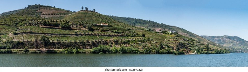 Point of view shot from historic train in Douro region, Portugal. Features a wide view of terraced vineyards in Douro Valley, Alto Douro Wine Region in northern Portugal.