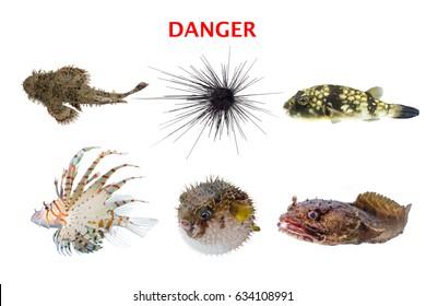 Poisonous aquatic marine life set,danger fish isolated on white