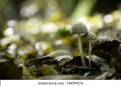Poisonous mushrooms in the autumn forest
