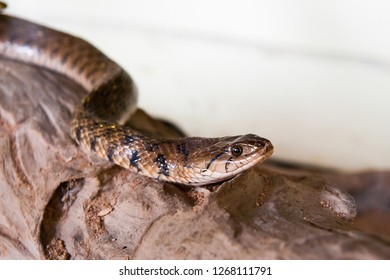 Poisonous snake is in the terrarium, close up