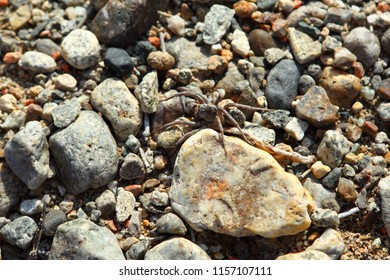Poisonous spider on rocks