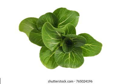 pok choi ,chinese cabbage,ingredient for organic food, Clipping path in this photo,clean food,product from farm and garden, top view of pok choi.