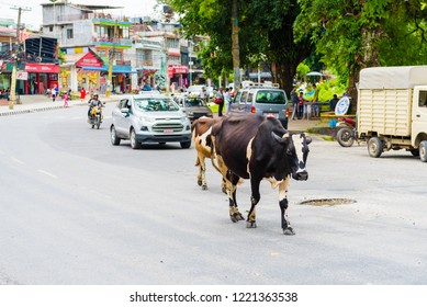 Pokhara, Nepal - July 31, 2018 : Street view in Pokhara town, Nepal. Cow is the national animal, considered sacred in Hinduism religion and worshipped in Nepal.