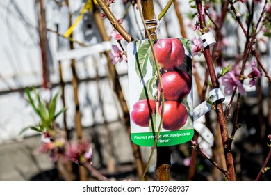 Wrocław, Poland- April 9,2020: Tag label of peach tree  in garden store.