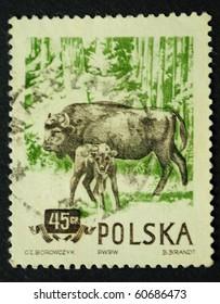 POLAND - CIRCA 1954: A Stamp printed in the Poland show the buffalo, circa 1954