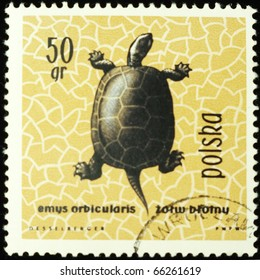 POLAND - CIRCA 1963: A stamp printed in Poland shows European pond turtle, series devoted to reptiles and amphibians, circa 1963