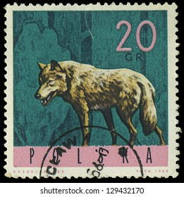 """POLAND - CIRCA 1965: A stamp printed in Poland from the """"Forest Animals"""" issue shows a wolf, circa 1965."""