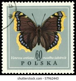 POLAND - CIRCA 1967: A stamp printed in Poland shows butterfly Vanessa antiopa, circa 1967.