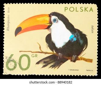 POLAND - CIRCA 1972: A stamp printed in Poland shows toucan, series, circa 1972