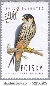 POLAND - CIRCA 1974: A stamp printed in Poland shows Falco subbuteo, series devoted to the birds, circa 1974