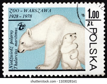 POLAND - CIRCA 1978: a stamp printed in Poland shows Polar Bear, Ursus Maritimus, Animal, circa 1978