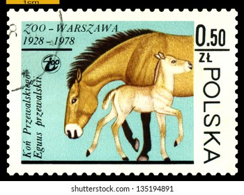 """POLAND - CIRCA 1978: A Stamp printed in Poland, shows image of a  Przewalski Mare and colt, from the series """"Warsaw Zoological Gardens, 50th anniversary. """", circa 1978"""