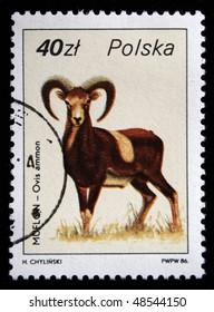 POLAND - CIRCA 1986: A stamp printed in Poland shows argali or  mountain sheep - Ovis ammon, curca 1986