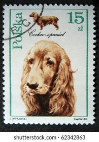 POLAND - CIRCA 1989: A stamp printed in the Poland shows dog Cocker spaniel, circa 1989