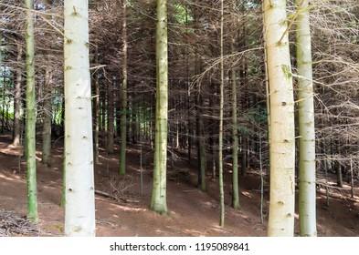 CIĘŻKOWICE, POLAND - September 5, 2018: Trees at daytime.