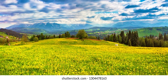 Poland spring Tatra mountains panorama. Green dandelion spring meadow on hills. Vacation, travel in Europe.