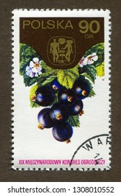 """Poland stamp no circa date: A stamp printed in Poland shows black currants, the series """"The 19th International Hortcultural Congress."""