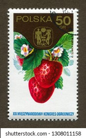 """Poland stamp no circa date: A stamp printed in Poland shows Strawberries, the series """"The 19th International Hortcultural Congress."""