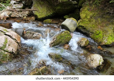 Poland - Tatra National Park in Tatry Mountains, part of Carpathian Mountains. UNESCO Biosphere Reserve. Forest stream.