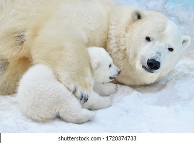 Polar bear with a bear cub. - Shutterstock ID 1720374733