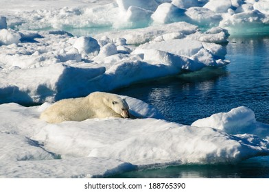 Polar bear laying down on a large ice pack in the Arctic Circle, Barentsoya, Svalbard, Norway