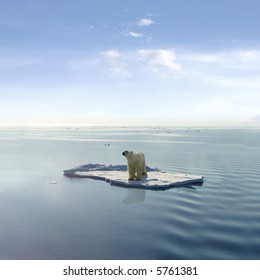 A polar bear managed to get on one of the last ice floes floating in the Arctic sea.