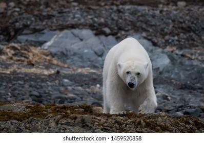 ARCTIC POLAR BEARS BLUE SCARF BEAR GIFT PRESENT FRIEND SISTER MUM MAM MOTHER